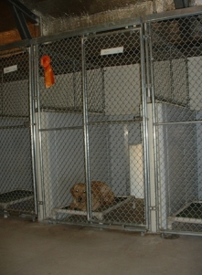Kennel 2